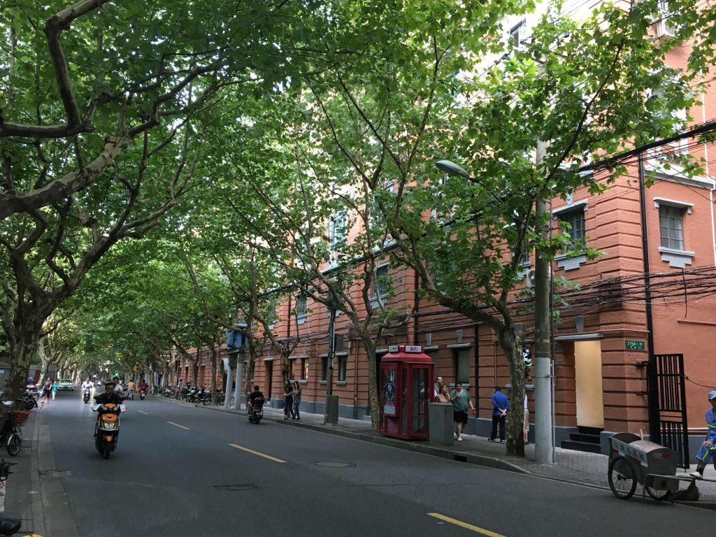 上海 老洋房與梧桐樹